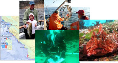 Clockwise from left: Map (P. Serpa), Child fishing (J. Greenberg), Trap gear (E. Roberts), Cabezon (J. Grebel), Diver with data (CDFW file photo)
