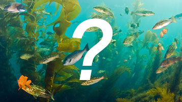 fish identification quiz