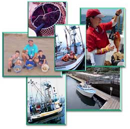 Status of the Fisheries Reports